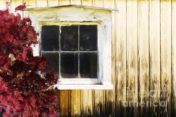Old White Window Print by Martin Dzurjanik