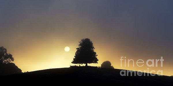 One Foggy Morning Print by Tim Gainey