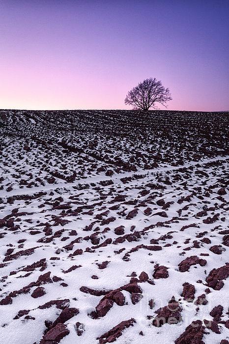 One More Tree Print by John Farnan