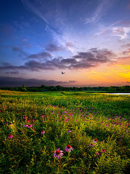 Open Spaces Print by Phil Koch