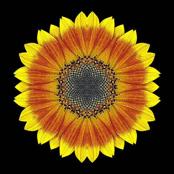 Orange And Yellow Sunflower Flower Mandala Print by David J Bookbinder