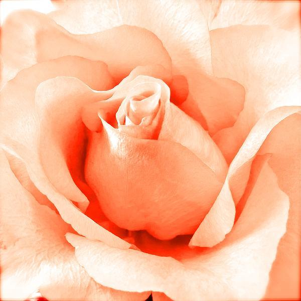 Angela Mahoney - Orange Blossom