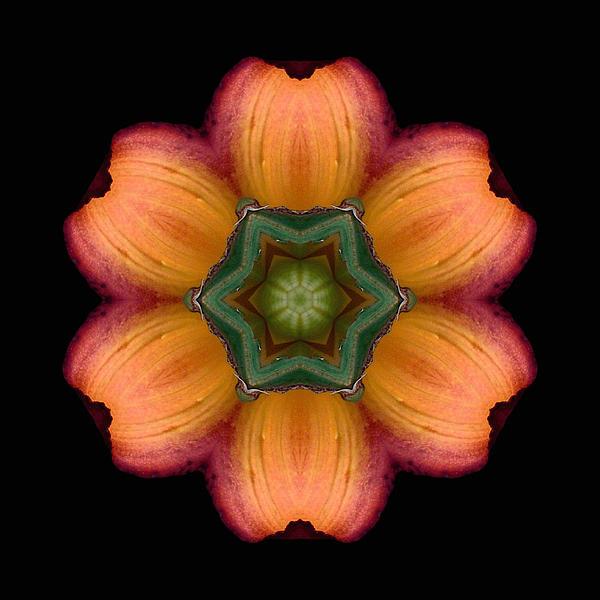 Orange Daylily Flower Mandala Print by David J Bookbinder