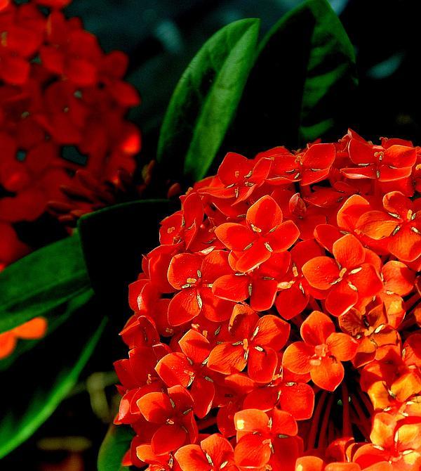 Antonia Citrino - Orange Delights