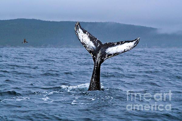 orca-bitemarks-liz-leyden jpgOrca Bite