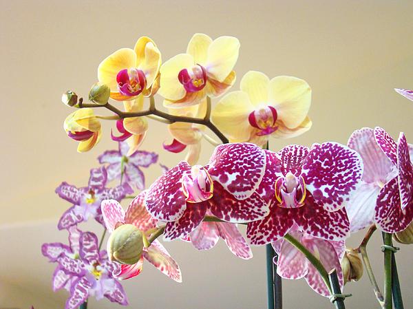 Orchid Art Prints Orchids Flowers Floral Bouquets Print by Baslee Troutman Orchid Art