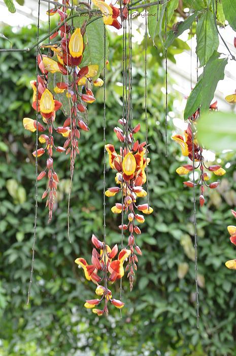 Orchid Falls Print by Sonali Gangane