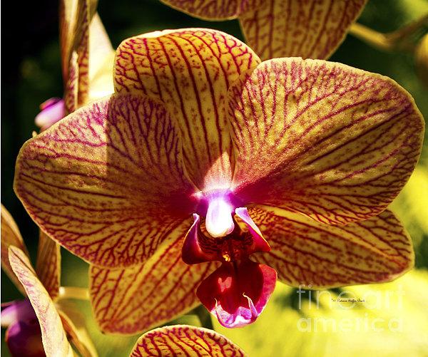 Patricia Griffin Brett - Orchid Study VII