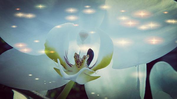 Xueyin Chen - Dreamy and Stunning