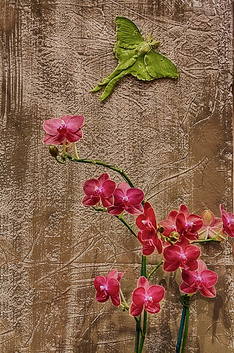 Orchids And Butterfly Print by John Haldane