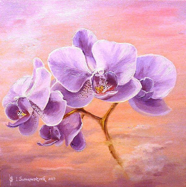 Irina Sumanenkova - Orchids at sunrise...