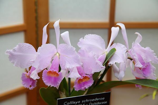 Orchids - Us Botanic Garden - 011315 Print by DC Photographer