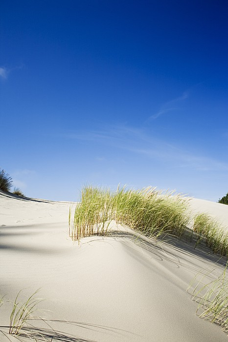 Oregon Dunes Print by Charmian Vistaunet