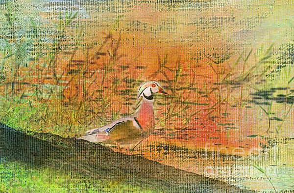 Oriental Duck Print by Deborah Benoit