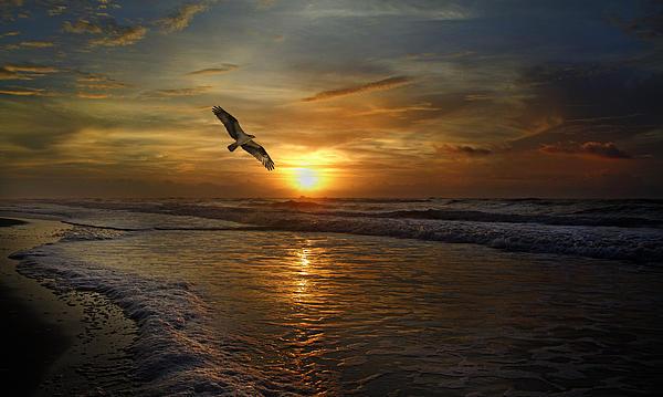 Osprey Sunrise Print by Betsy C  Knapp