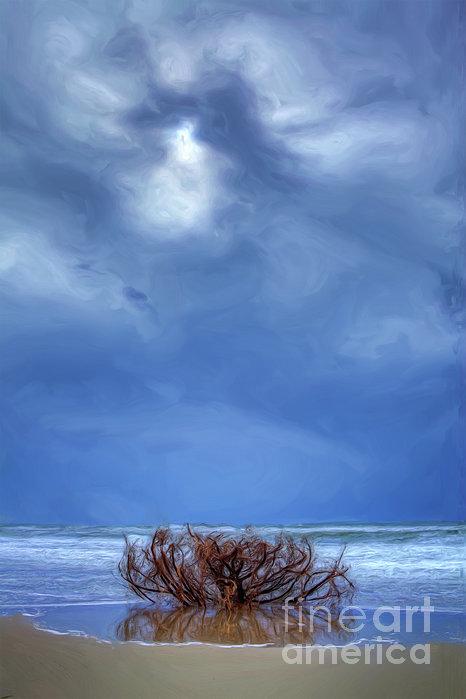 Outer Banks - Driftwood Bush On Beach In Surf II Print by Dan Carmichael