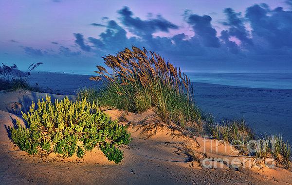 Outer Banks - Ocracoke Sand Dunes Oats Sunrise Print by Dan Carmichael