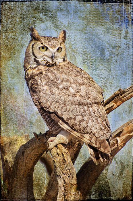 Owl On A Tree Print by Barbara Manis