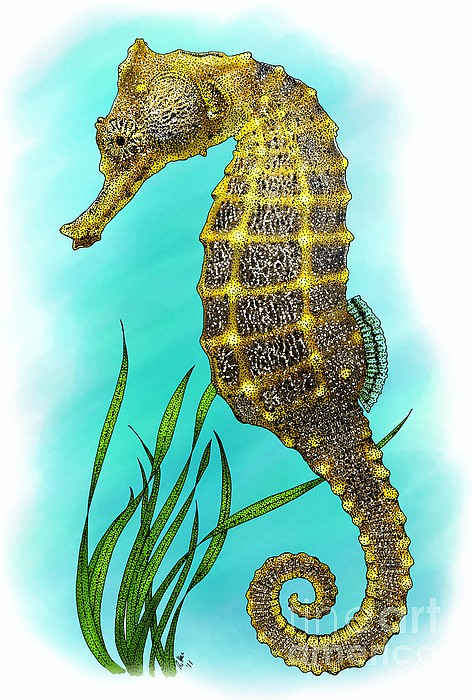 Pacific Seahorse Print by Roger Hall