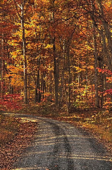 Lara Ellis - Painted Autumn Country Roads