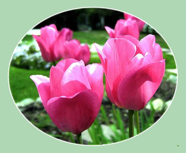 Will Borden - Painted Pink Tulips