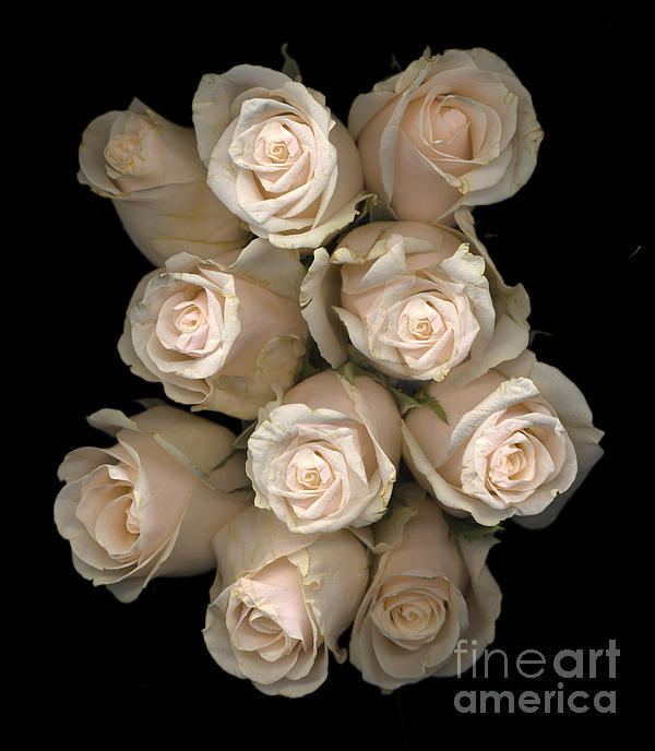Pale Roses Print by Jacqui Martin