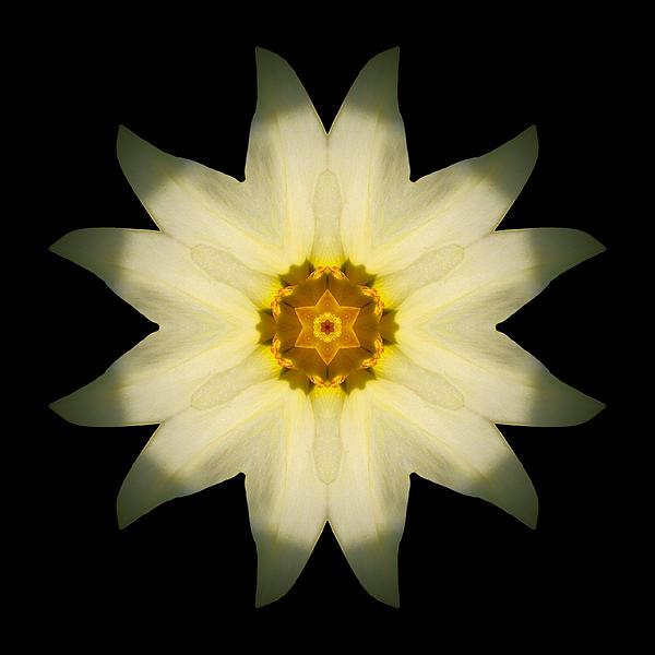 Pale Yellow Daffodil Flower Mandala Print by David J Bookbinder