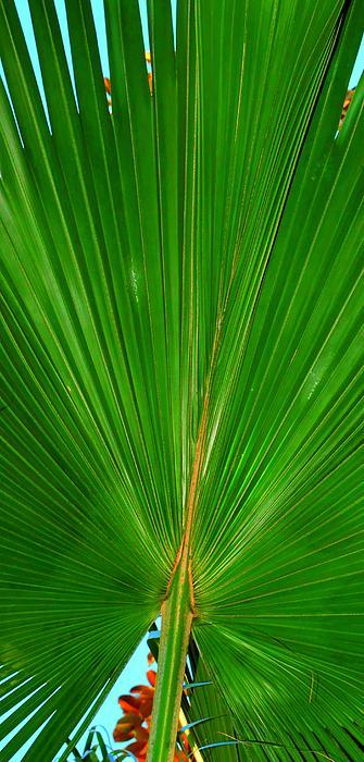 Linda Covino - Palm closeup
