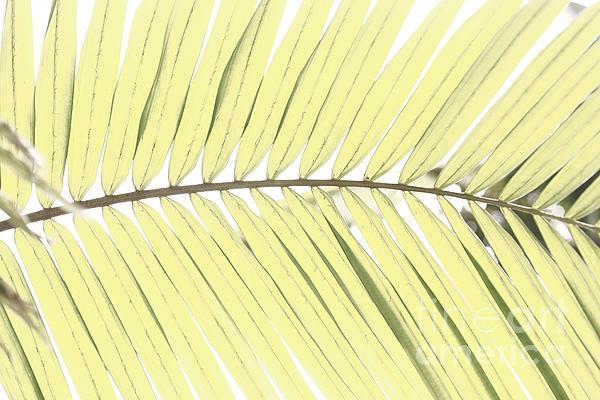 Palm Leaf Print by Gaspar Avila