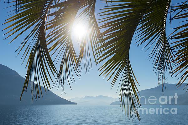 Palm Leaf Print by Mats Silvan