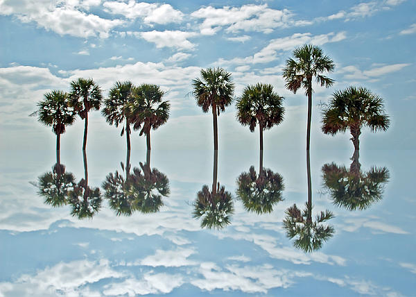Aimee L Maher - Palm Tree Reflection