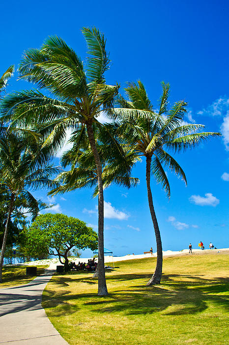 Palm Trees In The Park Print by Matt Radcliffe
