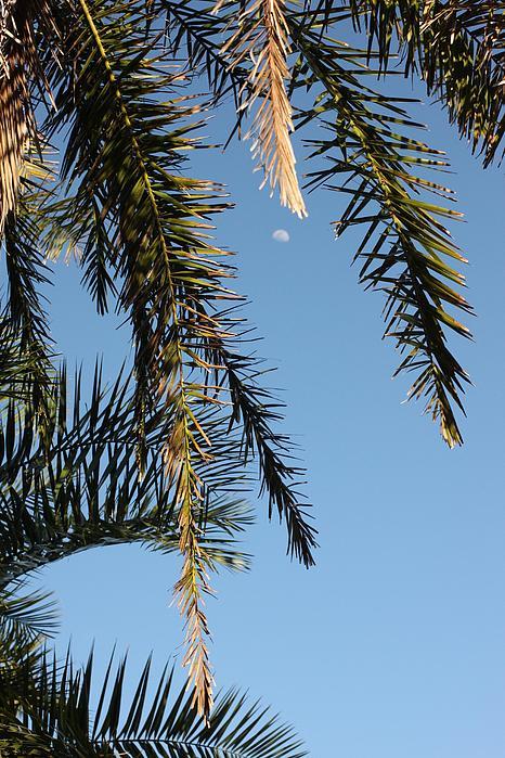 Palms In The Wind Print by AR Annahita