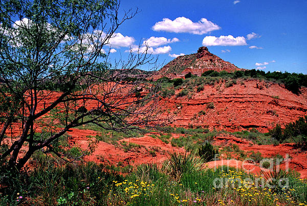 Palo Duro Canyon State Park Print by Thomas R Fletcher