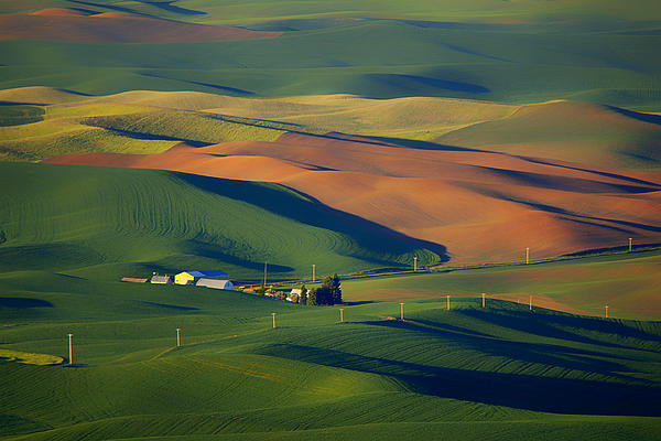 Palouse - Washington - Farms - #1 Print by Nikolyn McDonald