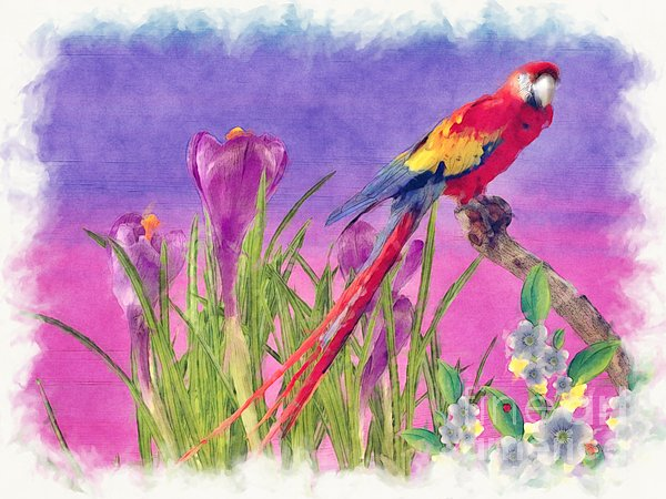 Parrot Print by Liane Wright