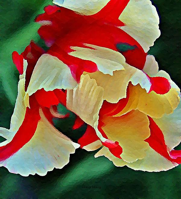 Chris Berry - Parrot Tulip in Oils