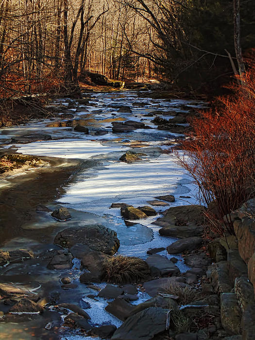 Passion For The Stream Print by Pamela Phelps