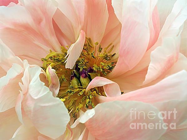 Pastel Floral Print by Kaye Menner
