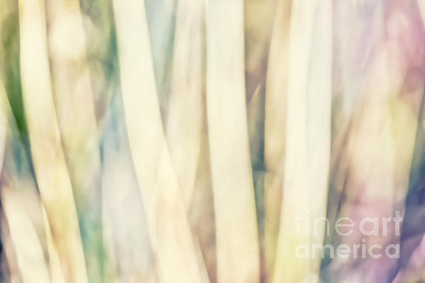 Pastel Forest Wild Grasses Photographic Abstract Print by Natalie Kinnear