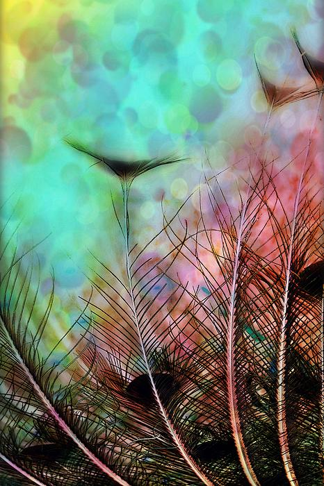 Christina Shaskus - Pastels And Peacock Feathers