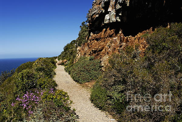 Path At Cape Of Good Hope Print by Sami Sarkis