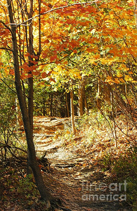 Kathleen Struckle - Pathway Through The Woods