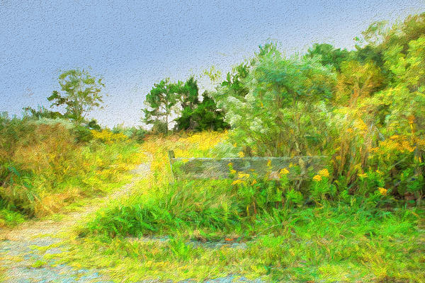 Olahs Photography - Pathway to the River