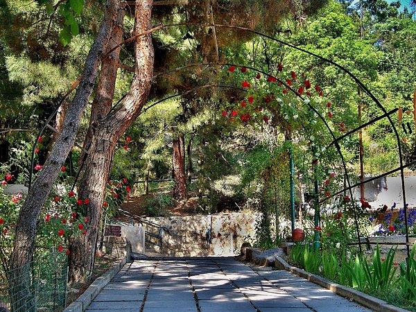 Rick Todaro - Pathways of Beauty