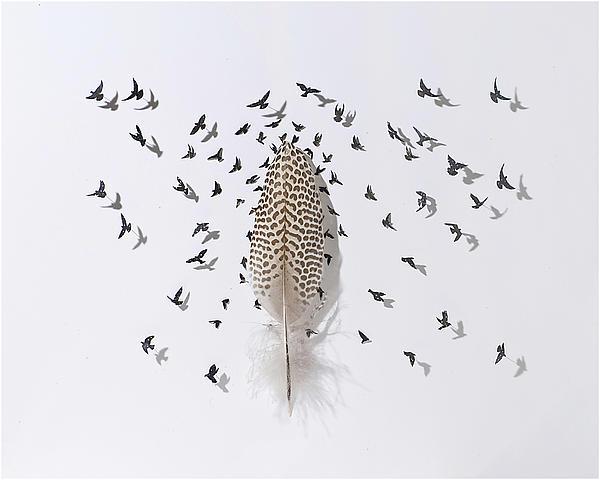 Pattern Flight Print by Chris Maynard