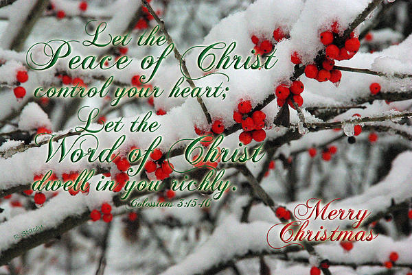 Peace Of Christ Holly Print by Robyn Stacey