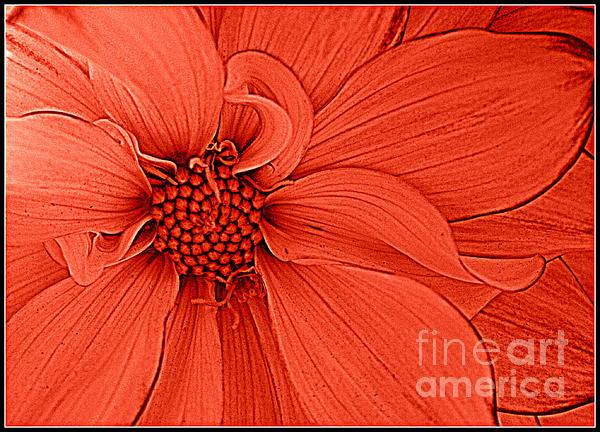 Peach Blossom Print by Photographic Art and Design by Dora Sofia Caputo