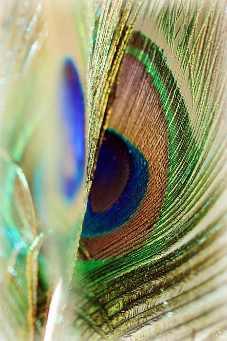Peacocks Dance The Samba Print by Lisa Knechtel