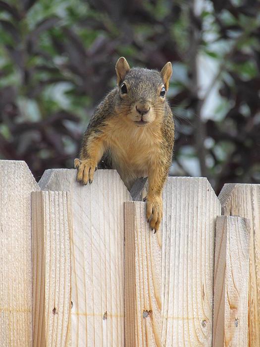 Michael Putthoff - Peek-a-boo Squirrel